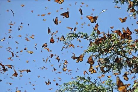 mariposas.volando